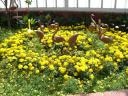 botanical_garden1.jpg